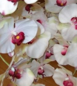 Silk orchids