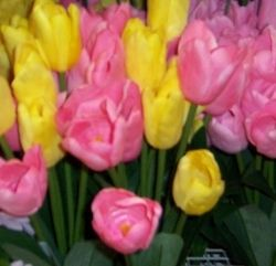 Silk tulips are available year round.