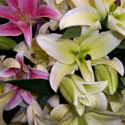 Pink and white lilies.