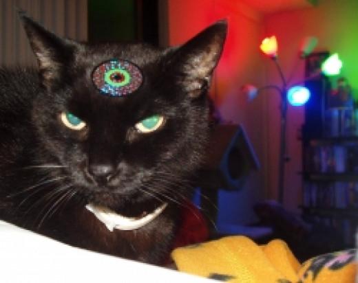 Fatbat the cat wearing his Halloween costume.