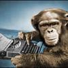 ChimpWithKeyboard profile image
