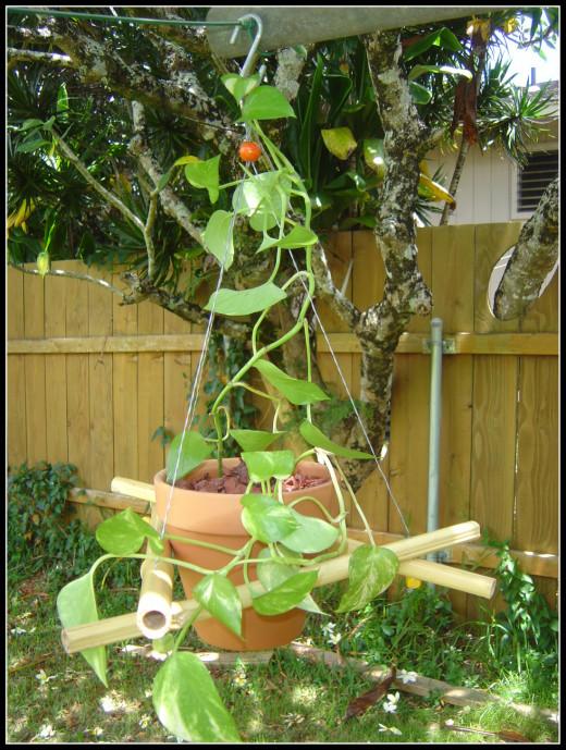 Bamboo Outdoor Hanger DIY