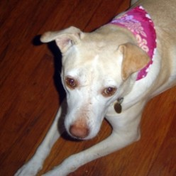Bandanas for Dogs - Easy to Make