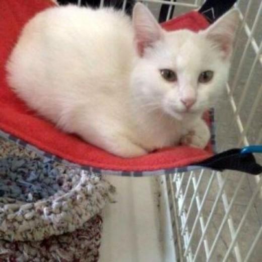 Cat Hammock Kitty Close Up!