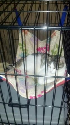 Hammocks for Cats - Cat Hammocks