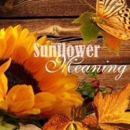 sunflower meaning hubpages. Black Bedroom Furniture Sets. Home Design Ideas