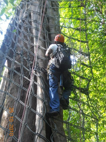 The second step, climbing a spider web