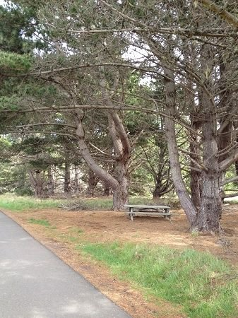 Picnic table under pine trees