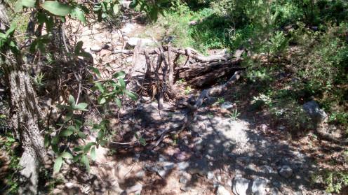 Bog Spring Trail
