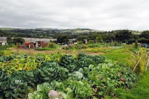 Hillside vegetable garden