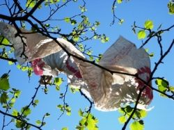 Disposable picnic tablecloth in tree