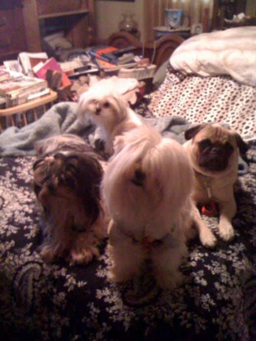 Freddie, Teddy and Charlie