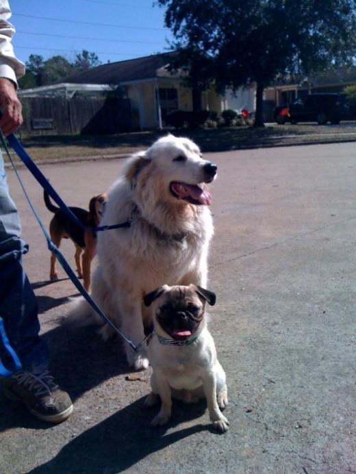 Waco and Charlie still training