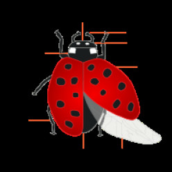 Want to learn all about Ladybugs?