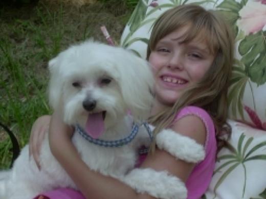 Freddie Maltese Dog 2006 copyright Vikk Simmons