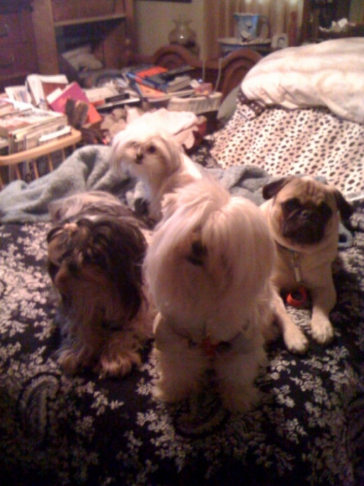Little boys and girl wake up: Teddy, Freddie, Charlie and HoneyBunn