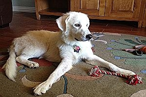 Mkey - This laid-back sweet pup is about 9 months old, still a puppy, and looking for a home.