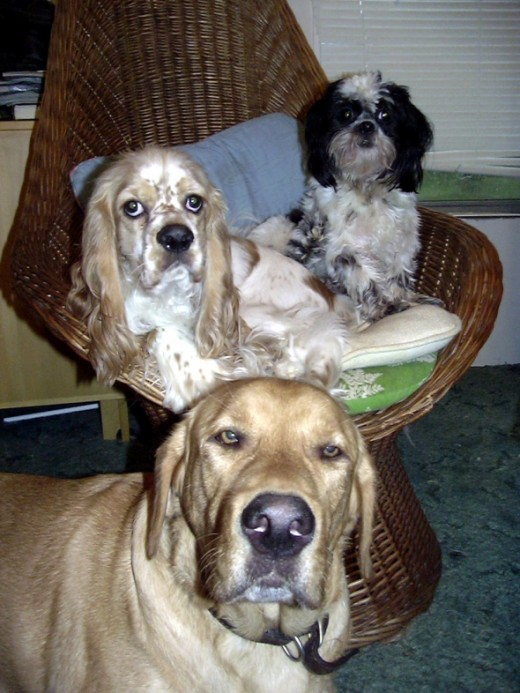 Teddy sits with Riley and Beau.
