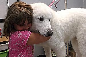 "Luna Loo - This 10 month old little Pyr was found walking down Riverside STreet in Austin. She was scared and sad. Not anymore. Today she's happy, cuddly, and ready to be adopted. She's a ""petite"" Pyrenees, and is good with children, dogs and cats. N"