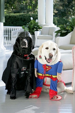 Halloween's gone to the dogs