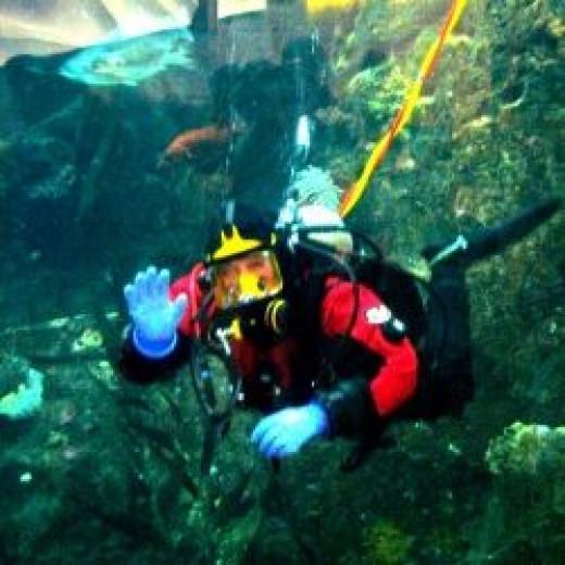 Diver at the Seattle Aquarium