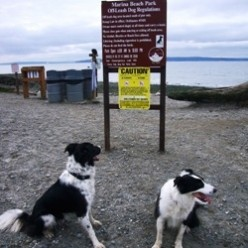 Marina Beach Dog Park Edmonds WA