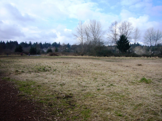 Marymoor Dog Park Meadow