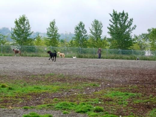Magnuson Dog Park - Seattle, WA