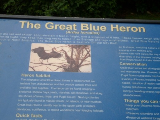 A sign with information about the Great Blue Herons that frequent the area around the locks