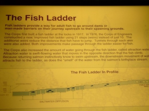 A sign showing how the fish ladder works