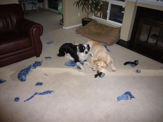 Skye and her partner in crime, Tyson.  The remains after a game of tug of war with some PJs that Tyson pulled out of the hamper.