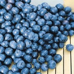Jersey Blue Berry