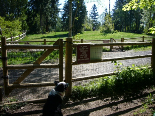 Another view of the meadow area from the forest trail area