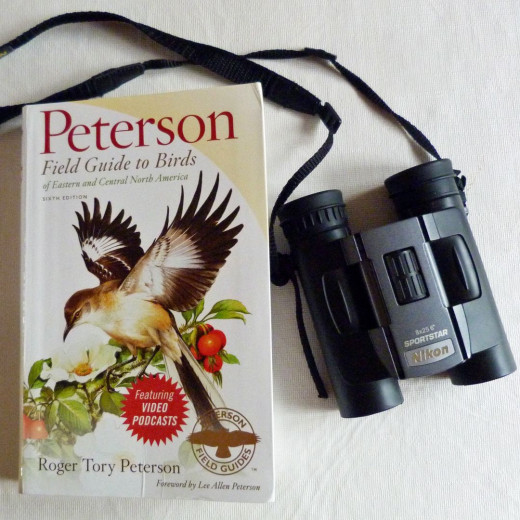 My essential birding gear