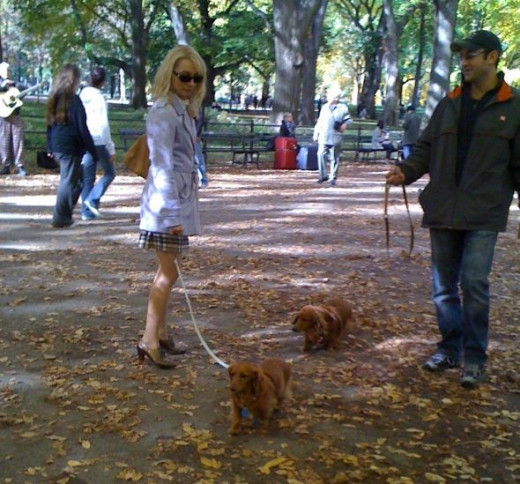 Woman With Dog In Central Park New York