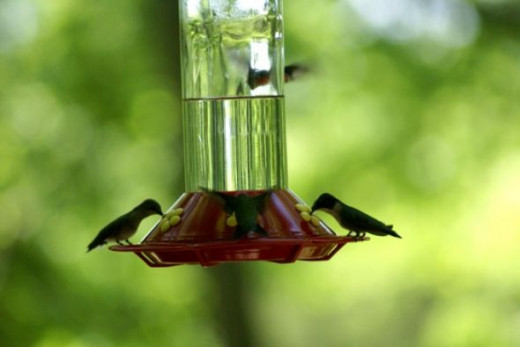 It was fascinating to watch the hummingbirds feed.