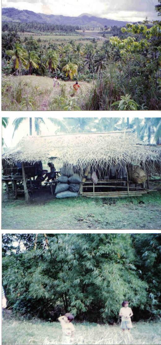 nipa hut, bamboo trees