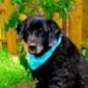 CandiceE profile image