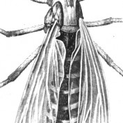 spanofagnat profile image