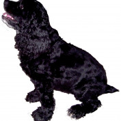 Blackspaniel1 profile image