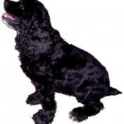 Blackspaniel1 profile image