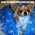 DIY Pet Gift: How To Make A No-Sew Pet Bed