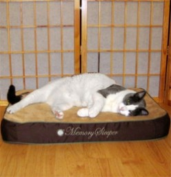Best Orthopedic Cat Bed: My Pick