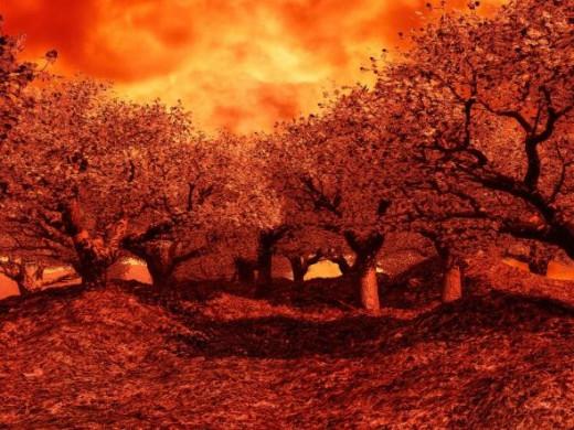 Fall Trees - Free Image via Kallias X