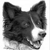 Sam Montana profile image