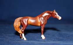 Arabian micro mini, owned and photographed by Jeanne Grunert