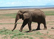 Elephant Travel Africa