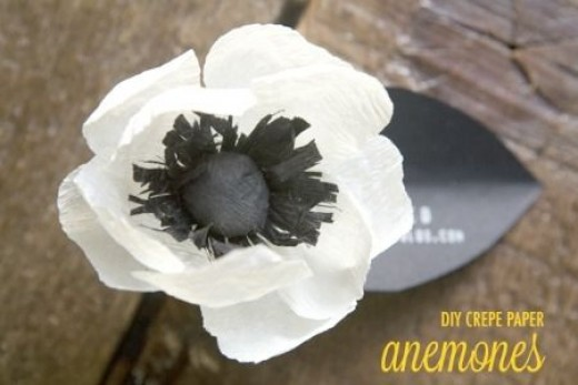 white and black anemones