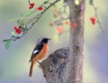 4 Good Cameras for Wildlife Photography: Reviews
