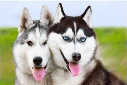 Top 10 Most Beautiful Dogs